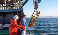 Sustainable fishing boat hauls up its catch