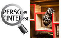 Persons of Interest logo and chicken