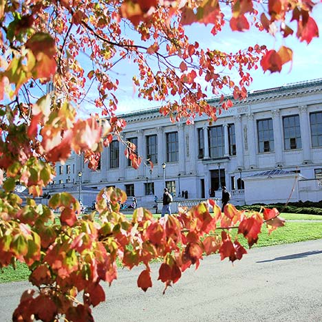 Doe Library behind autumn leaves. Photo by Keegan Houser.
