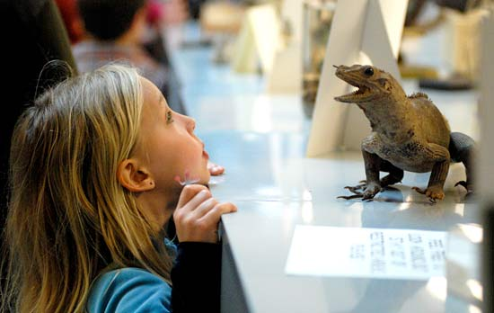 Young Cal Day visitor looks at a lizard
