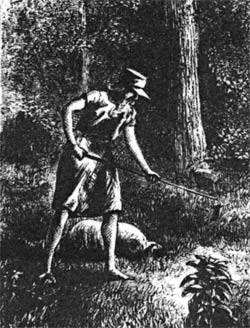 An etching of John Chapman, aka Johnny Appleseed