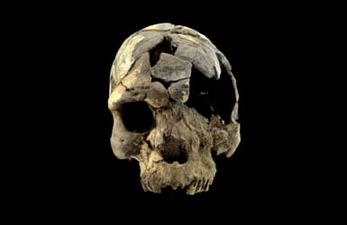 Homo sapien skull from 160,000 years ago