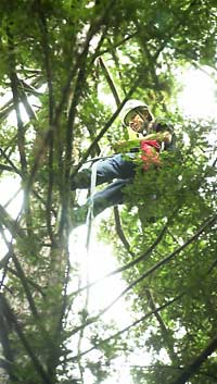Placing sensors on a redwood