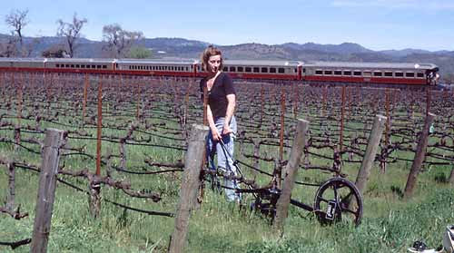 Researcher pulls a radar unit through vineyard