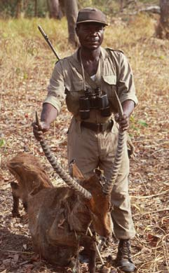 Ghanian ranger with waterbuck antelope