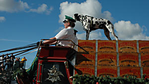 Dalmation atop Budweiser float