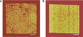 Comparative images of nanowire arrays