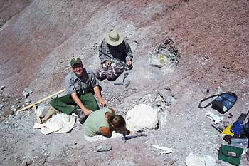 Revueltosaurus quarry excavation