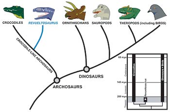 evolutionary tree of dinosaurs and crocodiles