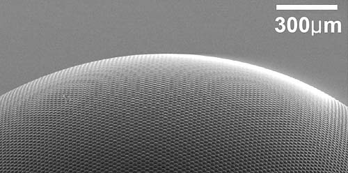 scanning electron microscope image of the surface of an artificial compound eye