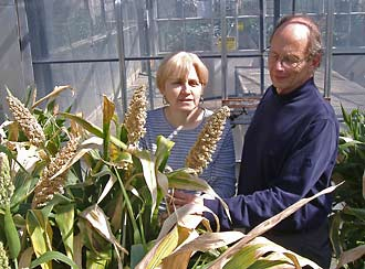 Peggy Lemaux and Bob Buchanan inspect sorghum