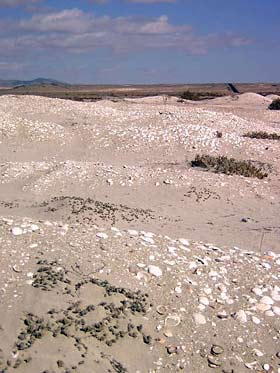 Fossil deposits near Playa Ramada, Chile