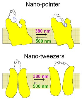 light-activated nanotweezer diagram