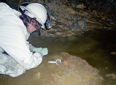 Sampling pink biofilms growing in acid mine drainage deep underground in the Richmond Mine, Iron Mountain, Calif. The water is almost as acidic as battery acid, with a pH of about 1.