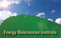 Energy Biosciences Institute