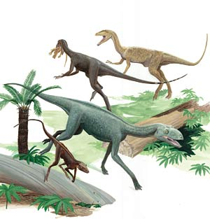 two carnivorous dinosaurs and two dinosaur ancestors