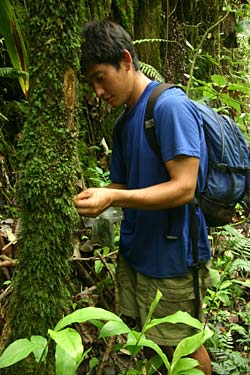 COllecting ferns in Moorea