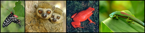 Madagascar butterfly, lemurs, frog and gecko