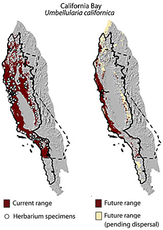 range map for California bay laurel