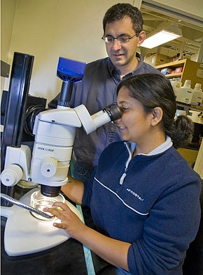 Daniel Rokhsar and graduate student Mansi Srivastava in the lab