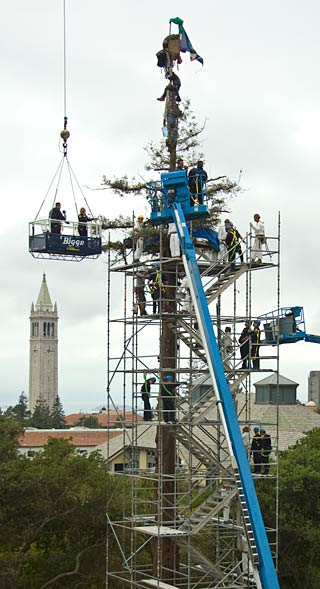 Erecting scaffold around tree and protesters