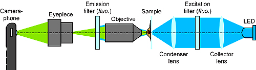 Schematic of the CellScope set up for fluorescent imaging. For bright field imaging, the two filters and LED are removed.