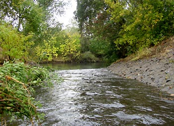 combined flow of Chicken Ranch and Strong Ranch Sloughs as they enter the American River