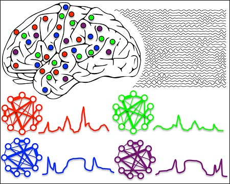 illustration of how brain rhythms organize distributed groups of neurons into functional cell assemblies