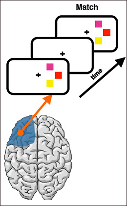 diagram of brain matching images