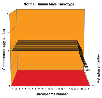 Karyograph of a normal human male.