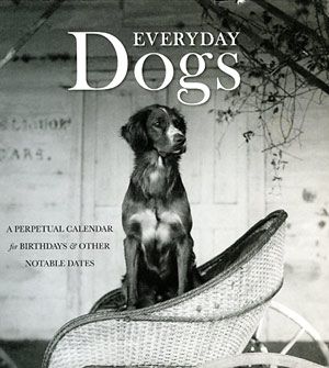 Everyday Dogs
