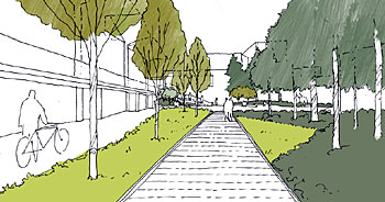 Sketch of the rain garden