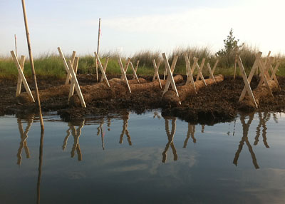 Growth tubes in the marsh