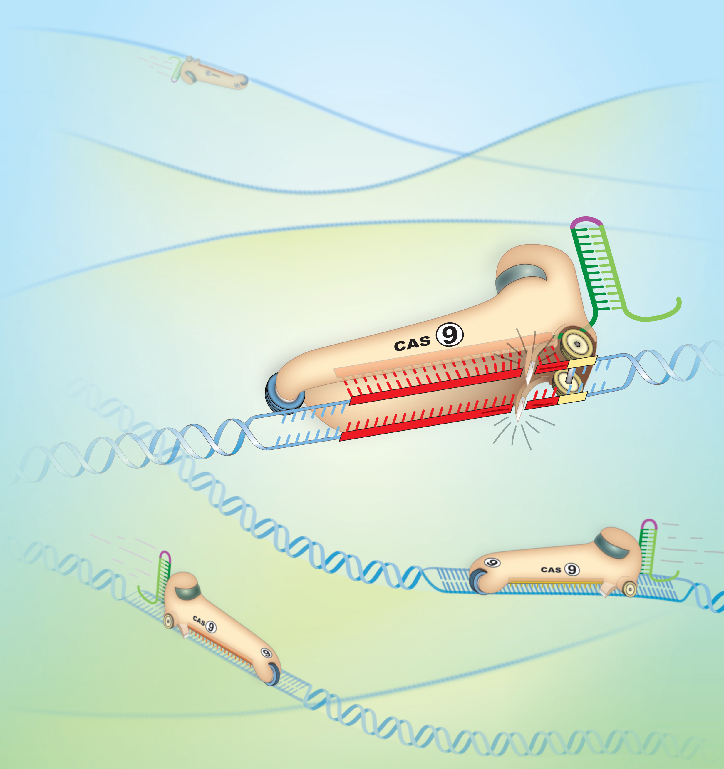 Cheap and easy technique to snip DNA could revolutionize