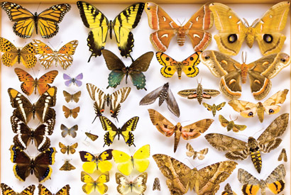 Help wanted: Public needed to uncover clues in natural history collections